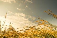 花草在与空间天空的早晨 免版税库存图片