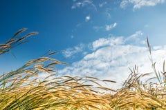 花草在与空间天空的早晨 免版税库存照片
