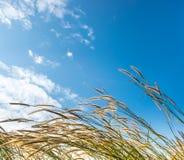 花草在蓝天的早晨 库存图片