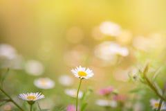 花草在软的颜色背景中 库存照片