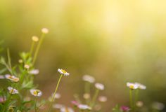 花草在软的颜色背景中 免版税库存照片