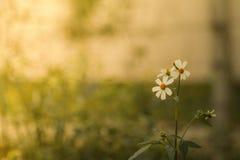 花草在软的颜色背景中 免版税图库摄影