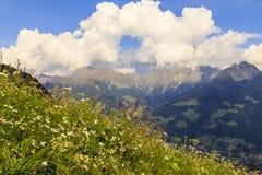 花草甸在南蒂罗尔,意大利 库存图片