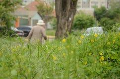 花草甸在城市 库存图片