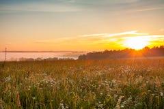 花草甸在明亮的饱和的日出下的乡下 免版税库存照片