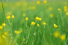 花草甸黄色 库存图片