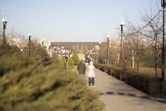 花荷兰keukenhof苗圃公园春天 免版税库存图片