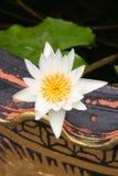 花莲花白色 库存照片