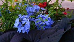花蓝色庭院 库存图片