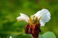 花蕾和蚂蚁在早期的阳光下 库存图片
