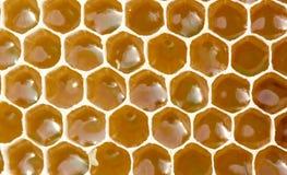 花蜜和蜂蜜在新的梳子 库存照片