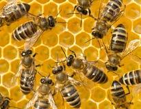 ? 花蜜和蜂蜜在新的梳子 免版税库存照片