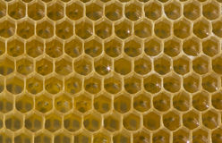 花蜜和蜂蜜在新的梳子 图库摄影
