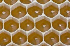 花蜜和蜂蜜在新的梳子 库存图片