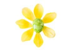 花被做一个绿色复活节彩蛋和黄色郁金香开花 库存照片