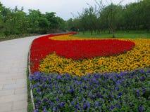 花被排行的足迹 库存图片