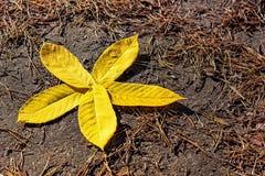 花被计划以黄色秋叶为基础 金黄秋天 库存照片