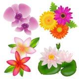 花被设置的向量 免版税库存照片