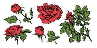 花被设置的高度详细的手拉的玫瑰 库存例证