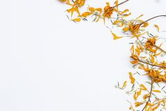 花装饰,干燥花在白色背景安排的黄色 库存照片