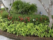 花角落在泰国 图库摄影