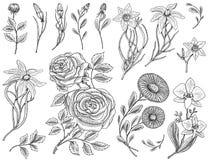 花设置了,与叶子和芽的玫瑰,草本医药春黄菊、黄水仙和兰花,百合 婚姻的植物园 向量例证