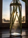 花词根在玻璃瓶关闭的 免版税库存图片