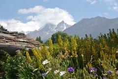 花辉煌在瑞士阿尔卑斯 库存照片