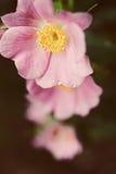 花通配粉红色的玫瑰 图库摄影