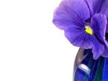 花重点紫色 免版税库存图片