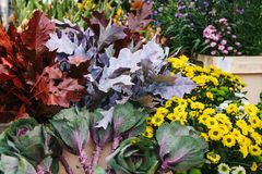 花销售叫在前景的Decorative圆白菜 其他不同的花是在背景旁边 库存图片