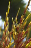 花隐藏的蜥蜴 库存照片