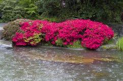 花雨池塘庭院 免版税库存照片