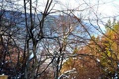 花雪时间冬天 风景在Poiana布拉索夫和所罗门石头 向冬天驻地的路 免版税库存照片