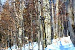 花雪时间冬天 风景在Poiana布拉索夫和所罗门石头 向冬天驻地的路 库存照片