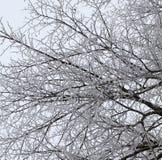 花雪时间冬天 库存照片