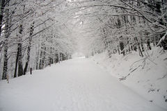 花雪时间冬天 免版税库存图片
