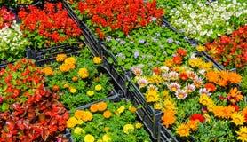 花颜色许多不同的品种在箱子的 免版税库存照片