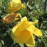 花黄色自然绿色 库存图片