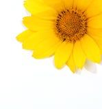 花黄色 图库摄影