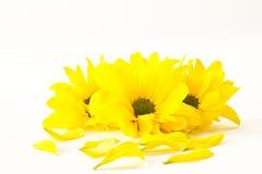 花黄色 免版税图库摄影