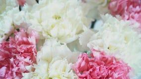 花,在白色背景的自转,花卉构成包括康乃馨 股票视频