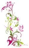 花,夏天,桃红色,绿色 免版税库存照片