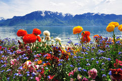 花,山ald湖 免版税库存图片