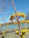 花,庭院 库存图片