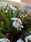 花,庭院 免版税库存图片