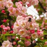 花,春天是以后的I 免版税库存图片