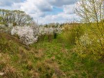 花,春天, 库存图片