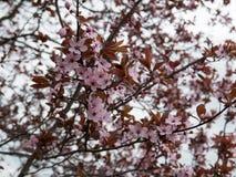 花,春天 库存照片