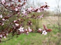 花,春天 免版税库存图片